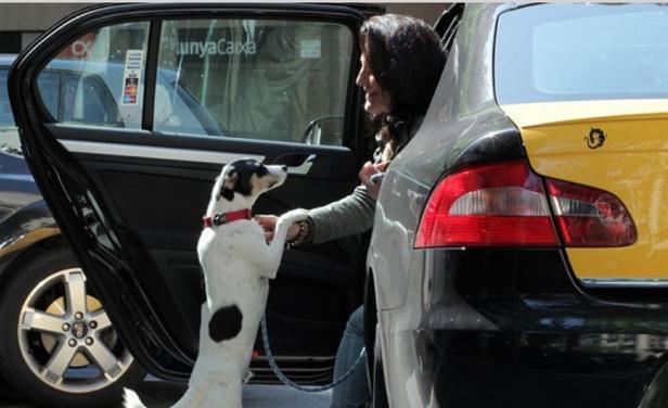 mascotas-taxi